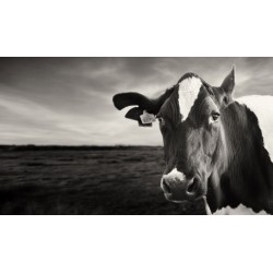 Clever Kate - signed photographic print